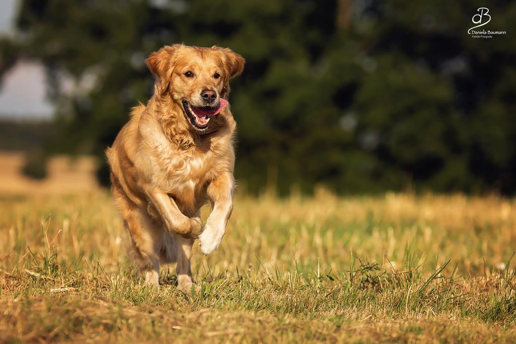 Mensch-Hund-Teamtraining Rückruf