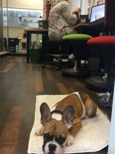 Bürohunde Ausbildung