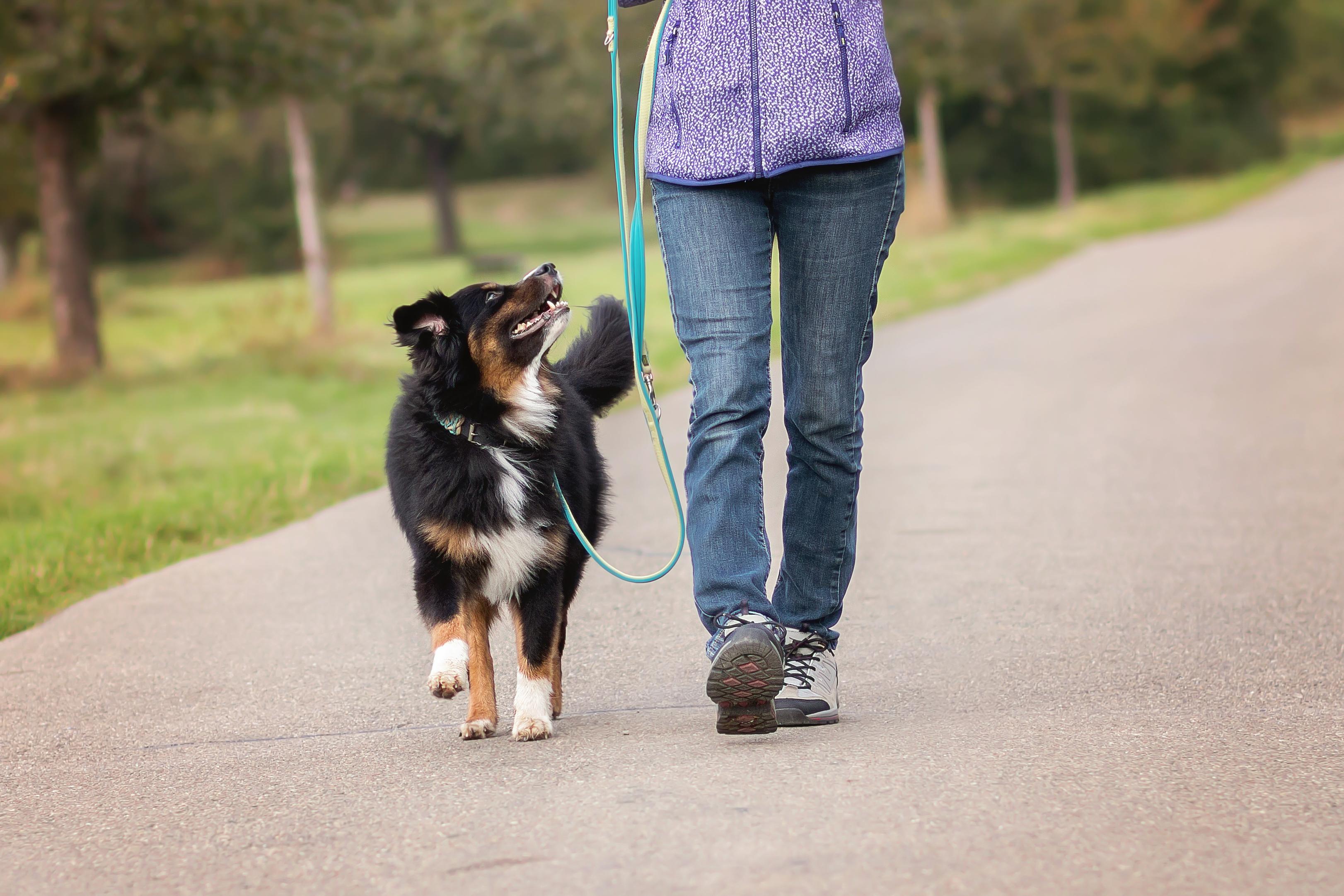 Locker leine laufen mensch hund teamtraining